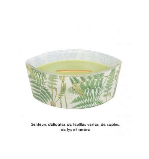botanical-garden-fern